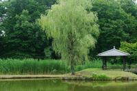 古河公方公園いろいろと - 光の 音色を聞きながら Ⅵ
