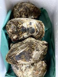 岩牡蠣 - がつたま便り