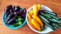 今日の収穫。 - チドルばぁばの家庭菜園日誌パート2