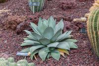 神代植物公園のサボテン - あだっちゃんの花鳥風月
