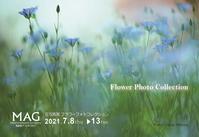 〜花写真展 フラワーフォトコレクション〜開催のご案内 - カメラの東光堂