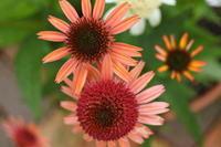 庭の元気色 - 日々の宝物その2