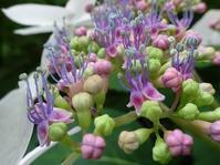 自然公園の花 - 花と葉っぱ