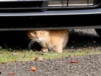 ネコを見つけると - 暮らしの中で