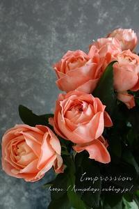 ご自宅用のバラ ラシャンス - Impression Days