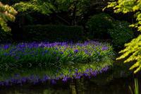 杜若咲く長岳寺 - 花景色-K.W.C. PhotoBlog
