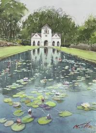 睡蓮 - まり子の水彩画