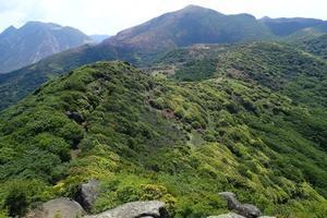 九重山のオオヤマレンゲ(良)2021年6月7日~11日撮影 -