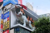 面白い!3Dの猫、海外で反響 東京の巨大広告「キャジラ」 - 昔の映画を見ています