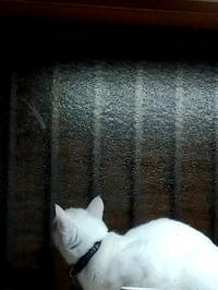 ヤモリにご執心 - 午睡のあと うめももさくら