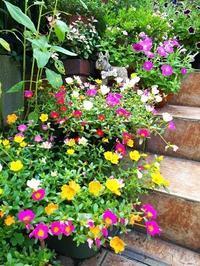 夏の花にはおひさまが似合う - 人生楽しんだもの勝ち!