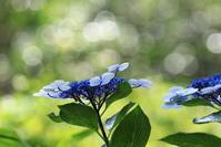 お花いろいろ - 四季折々