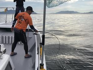 青物 釣果 - 釣果情報