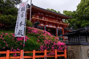 サツキ咲く八坂神社 - 花景色-K.W.C. PhotoBlog