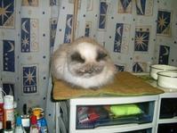 娘の愛猫ルナが亡くなりました - わんわん・パラダイス