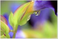 降り続いた雨 雨 - ハチミツの海を渡る風の音