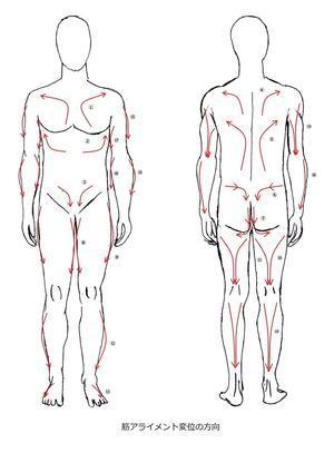 筋アライメントが変位する方向  ~臨床経験に基づいた見解~ - 身体内圧の理論 The theory of body inner pressure