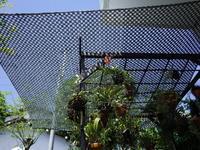 夏は遮光ネット - 庭日和 2