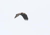 北海道ツアー5 - 写真で綴る野鳥ごよみ