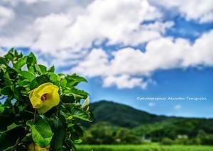 糸島の景~いとしまのしらべ⑤③ - 糸島の景~いとしまのしらべ~