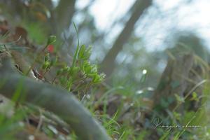 山の上の桃源郷②**静かに咲く花もある - きまぐれ*風音・・kanon・・