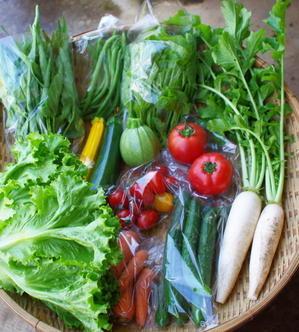 今週の野菜セット(7/20~7/24着) - キシノウエンの 今日のてしごと
