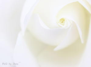 通院日・ブログお休みのお知らせ - 乳がんと共に生きる私のDaily Life