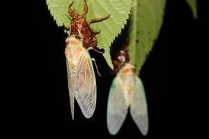 蝉の羽化 - ワイルド&ワイルド