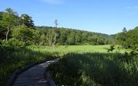 今年の尾瀬山歩 - 山歩風景