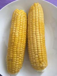 トウモロコシの収穫 - ワクワク♪ハマっ子野菜作り♪