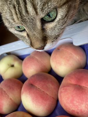 名古屋から 桃がどんぶらこ〜どんぶらこ〜 - チェリーちゃんねる  第2章