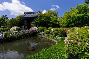 ツツジ咲く妙満寺 - 花景色-K.W.C. PhotoBlog