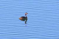 人造湖の様子 - 銀狐の鳥見