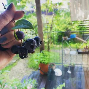 梅雨明けの庭〜上棟日和の現場レポート - カフェスタイルの家づくり~        Asako's WORK & LIFE