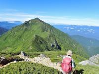 山頂直下は高山植物のお花畑(三ノ沢岳) - 山旅~ぼくを探しに