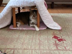 いつもと変わらぬ4連休 - 「両手のない猫」チビタと愉快な仲間たち