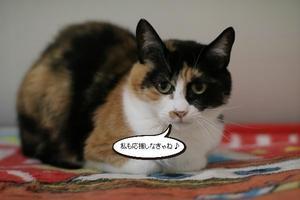 今日はだるだる - 保護猫さんのご縁探し
