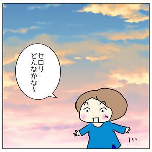セロリの苗が! - 島美砂☆ゆるゆる田舎生活