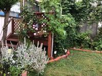 連日の猛暑の中での ちょっと嬉しいお庭 - ハンドメイド  Atelier   maki