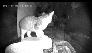 子猫現場に翻弄される - NPO法人 府中猫の会