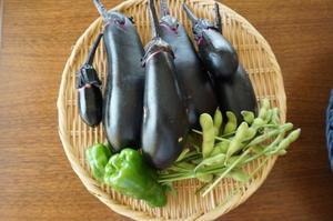 農業体験教室8 トマトの大収穫 - YUKKESCRAP