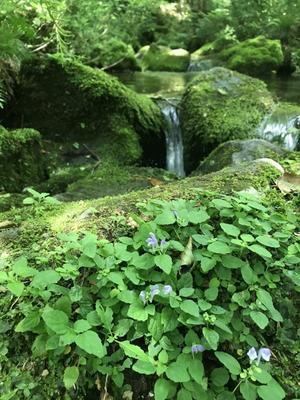 涼しい山旅  萬助小舎から笙ヶ岳周回 - tabi & photologue 3