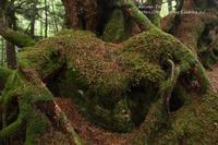 森のもののけ達  - 風の彩りー3