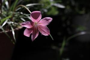 庭の花 - 四季折々