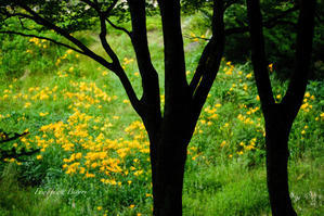 雨に濡れた植物 ** - ふわふわ日和