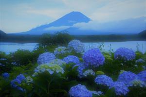 富士に紫陽花 ~精進湖~ - 雲母(KIRA)の舟に乗って