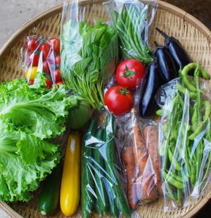 今週の野菜セット(7/27~7/31着) - キシノウエンの 今日のてしごと