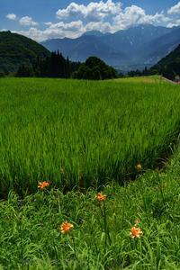 盛夏 - デジタルで見ていた風景