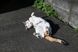 『試し撮り…猫』 - 『猫に焼き海苔』