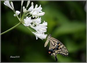 蝶と花 - あれこれ逍遥日記 Vol.2